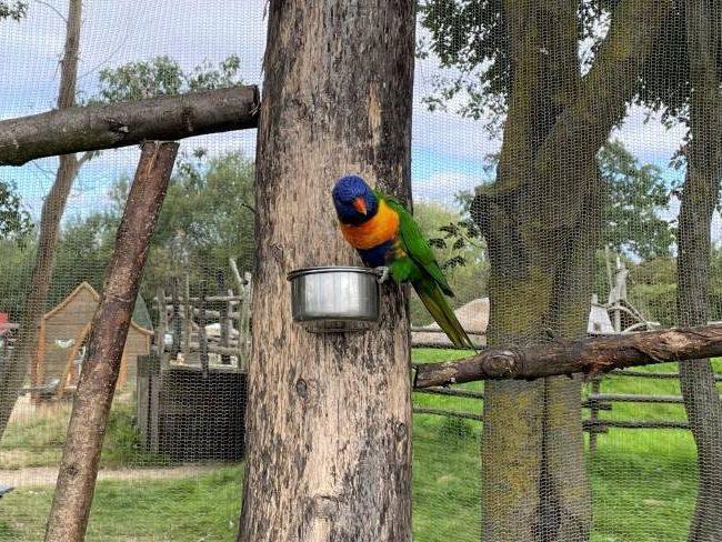 Hobbledown Farm and Zoo Animals