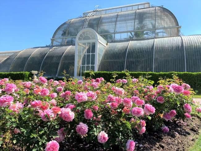 Kew Gardens Rose Garden