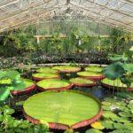 Visiting Kew Gardens Summer 2021