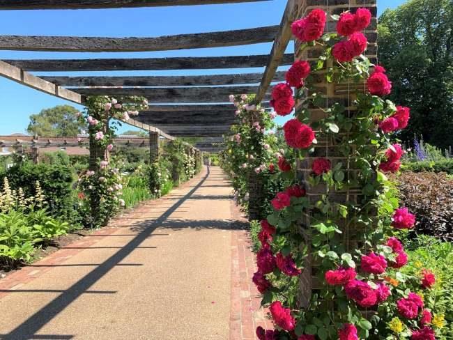 Rose pergola at Kew Gardens