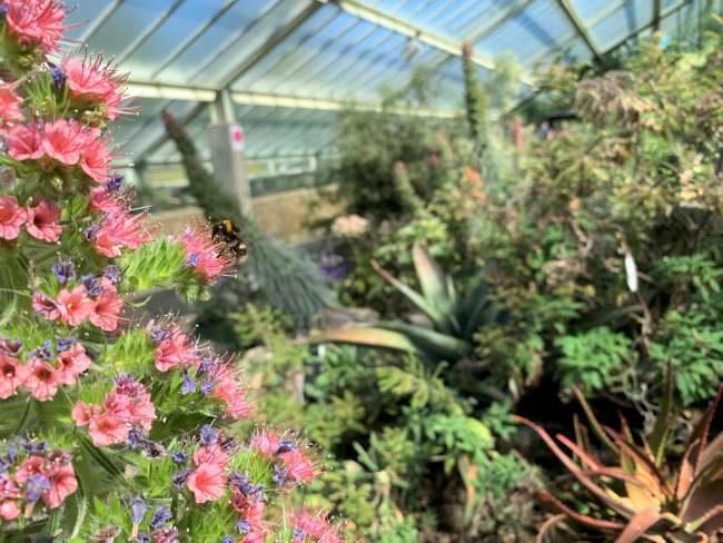 Visiting Kew Gardens Summer