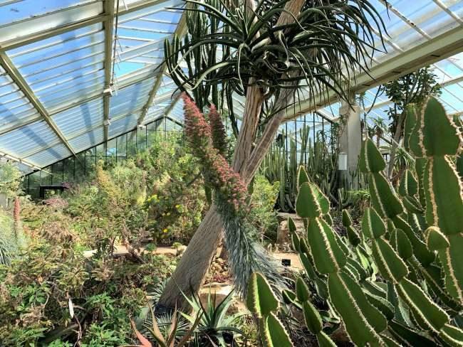 Princess of Wales Conservatory Kew Gardens