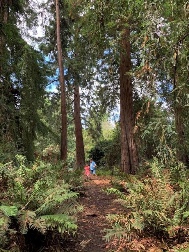 Redwood Grove Kew Gardens