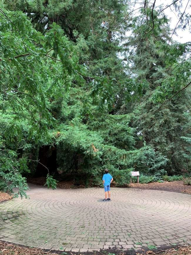 Redwood Grove Kew