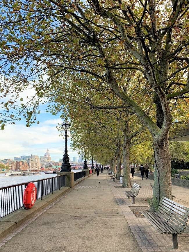 Autumn in London South Bank