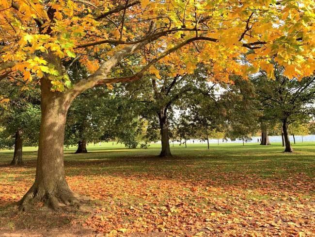Autumn in Kensington Gardens London