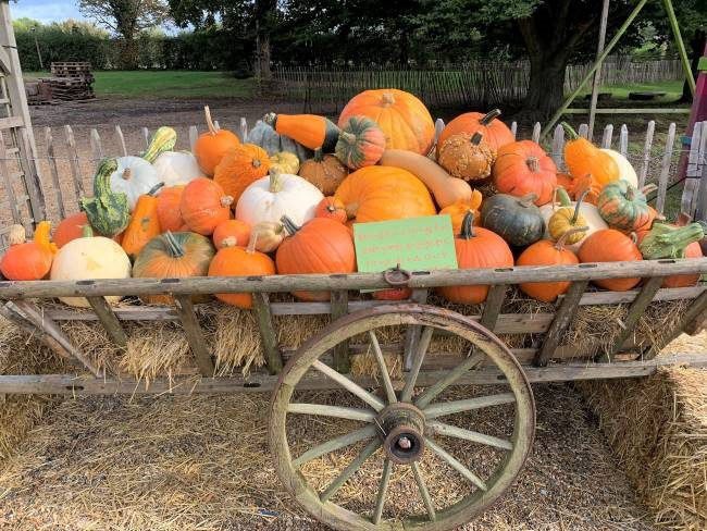 Pumpkin Display at Crockford Bridge Farm Surrey