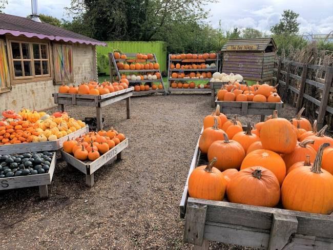 Crockford Bridge Farm Pumpkin Market