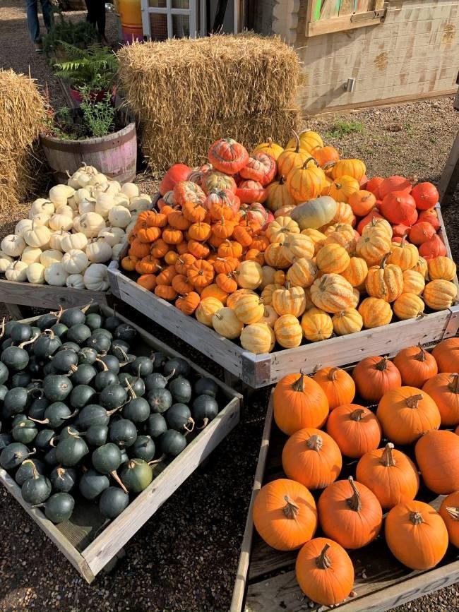 Pumpkins and gourds at Crockford Bridge Farm