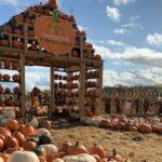 Pumpkin Patches Near London 2021