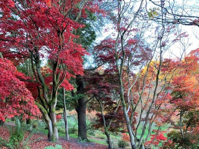 Winkworth Arboretum Surrey