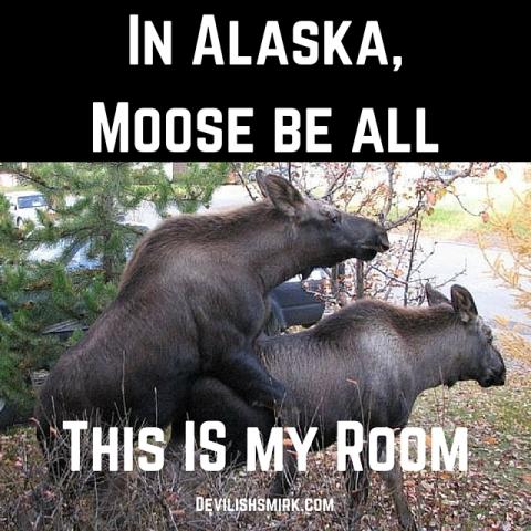 MooseRoom