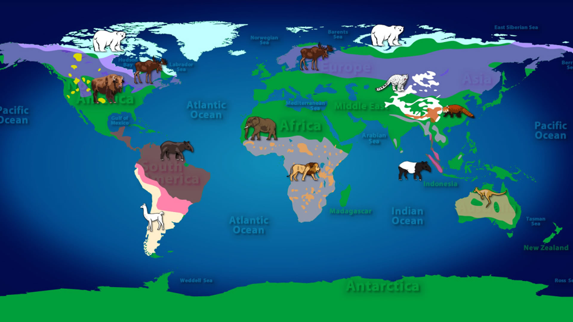 "Play ""Mammals of the World"""