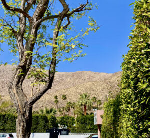 The view from suite 2 featuring a large tree on the left, mountains with blue sky in the background, palm trees, and a hedge on the right