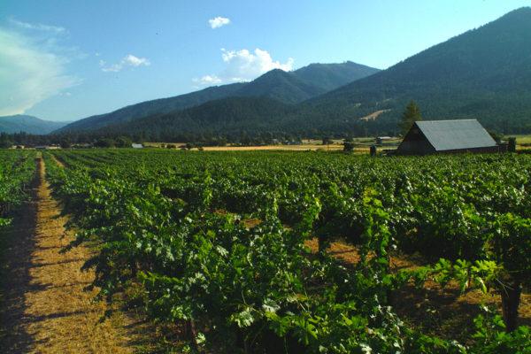 New Winery Photos 001