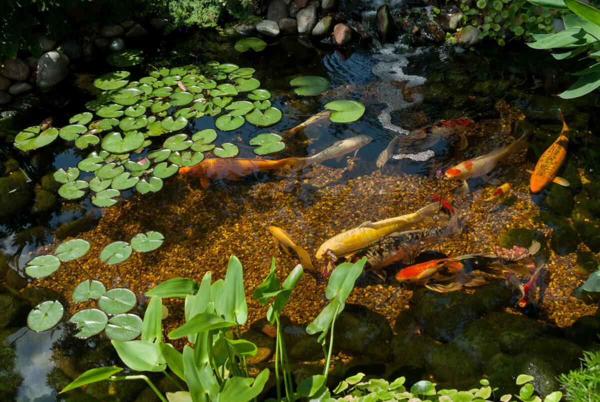 landscape pebbles in koi pond
