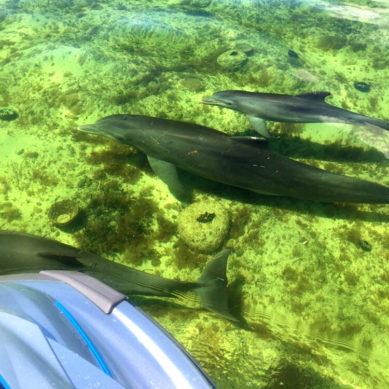 Dolphin Pod