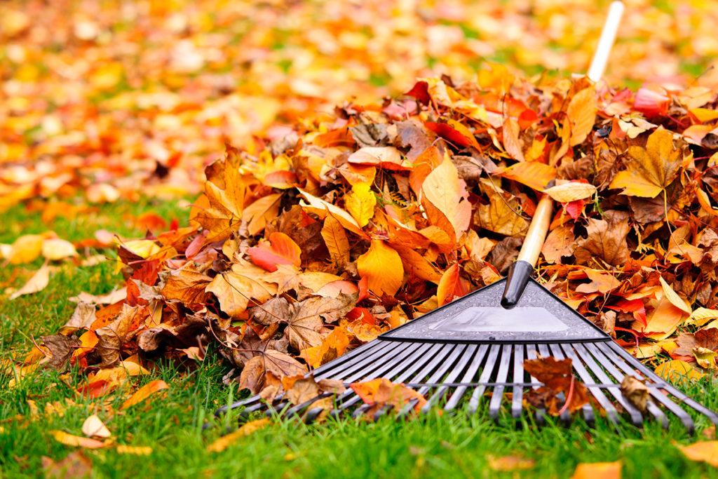 raking leaves for winter prep