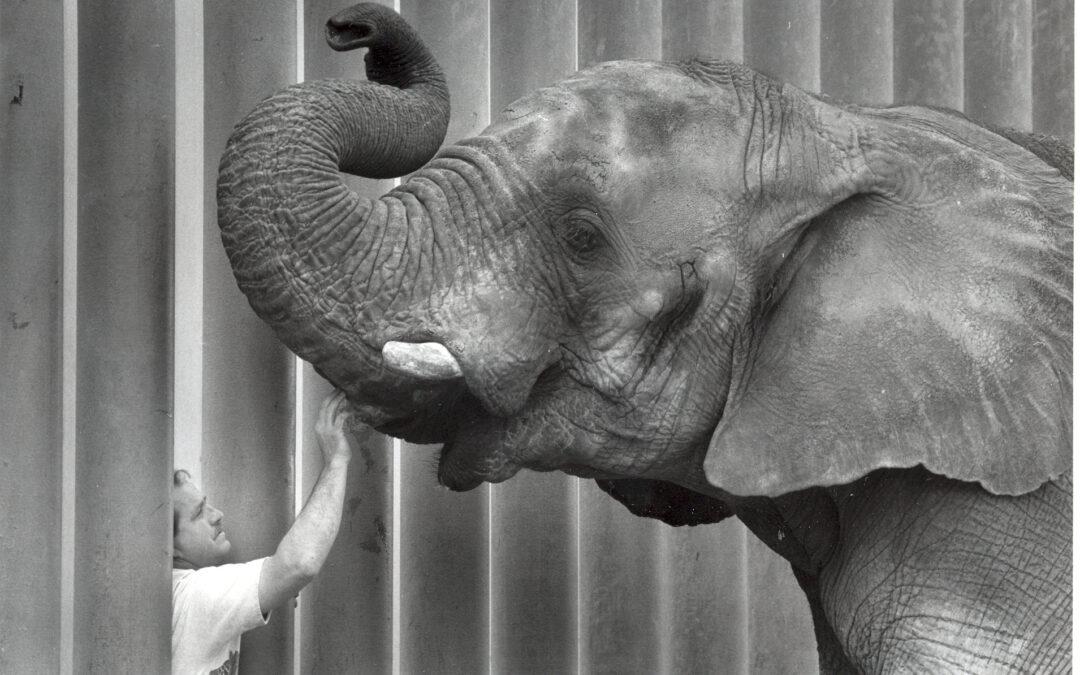 Celebrating Sonny's Life on World Elephant Day