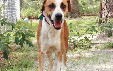AHS Rescues Bahama Dogs