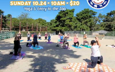Yoga in the Park – October 24th!