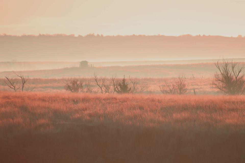 Foggy Morning on the Farm