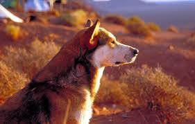 watching dog