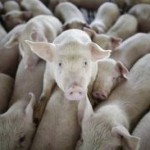 The Animal Farm Rule of Help Desks and Network Management