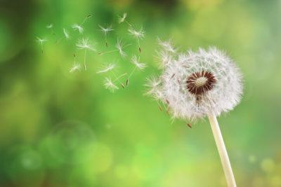 allergy testing & allergy care