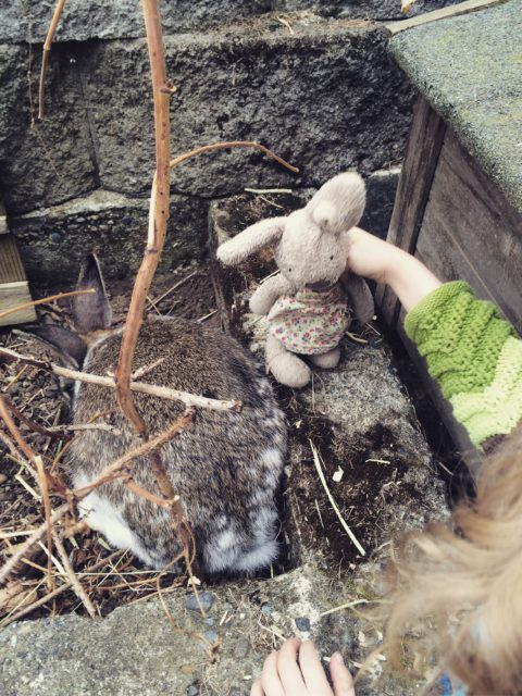 bunny and bunny baby