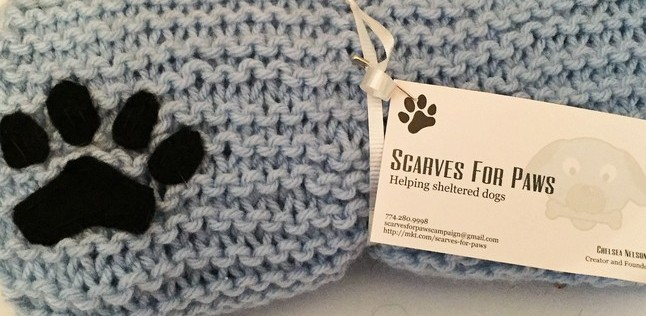 Scarves for Paws: A Small Business Helps Local Animal Shelters