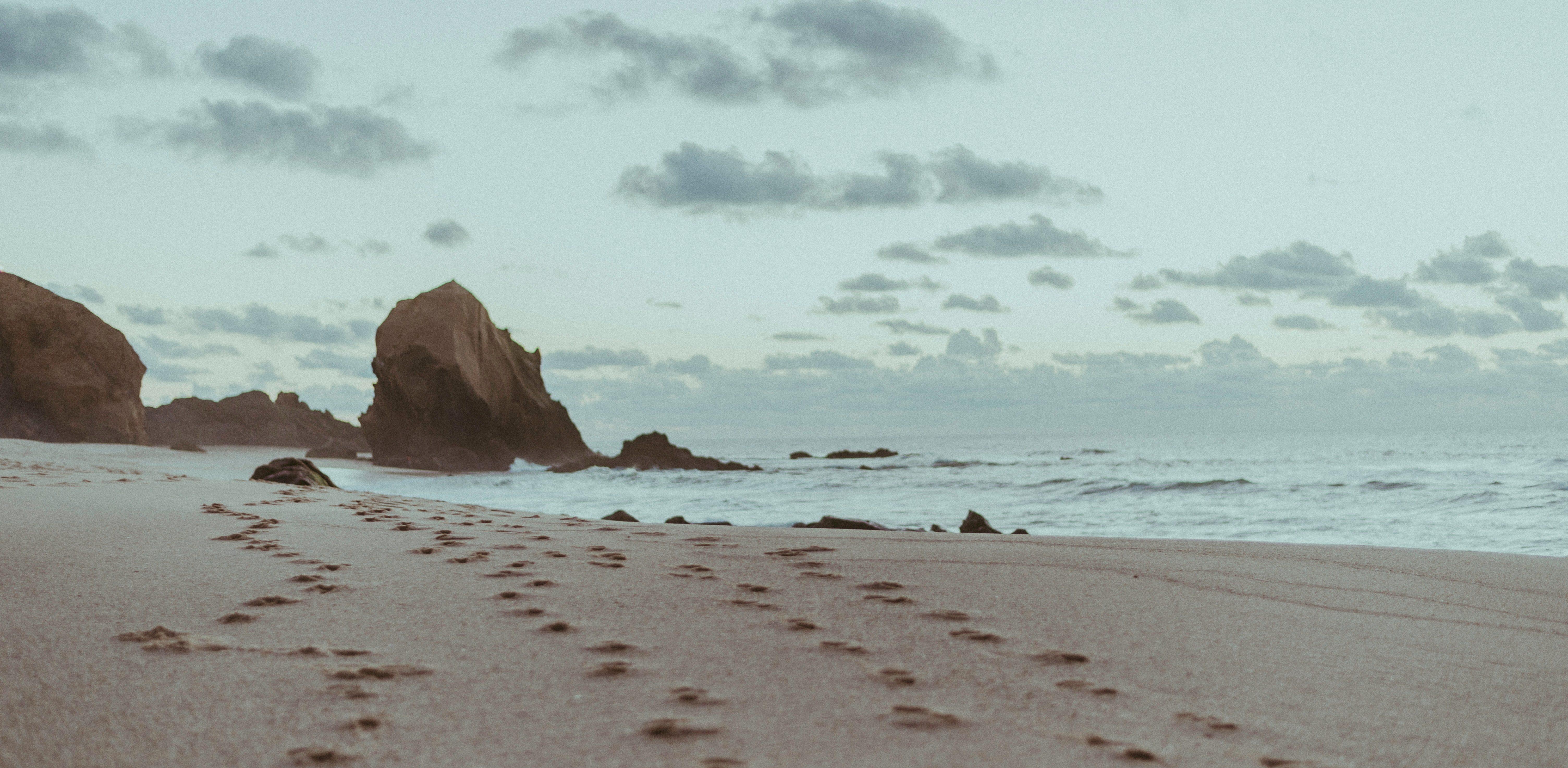 The Sea Turtle by Allison Xu