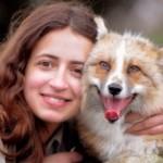 Un renard au comportement d'un chien, comment?