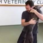 Émouvantes retrouvailles entre un chien et son maître