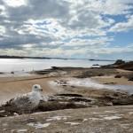 Comment les animaux du littoral vont vivre la «marée du siècle»