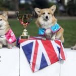 Un chien révèle le prénom du bébé de la duchesse de Cambridge