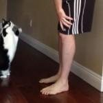 Ce chat demande un câlin d'une drôle de manière