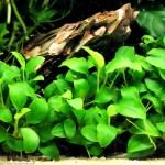 La quarantaine : pour les plantes aussi !