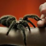 Les moustiques et les tiques transmettent des maladies. Mais qu'en est-il des araignées ?