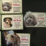 Louez un chien à l'heure à Tokyo