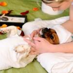 Comment masser son chien