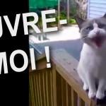 Un chat qui parle?