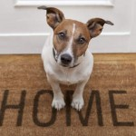 Vivre avec un chien pourrait aider au développement des probiotiques