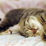 Dormir avec son chat, est-ce vraiment une bonne idée