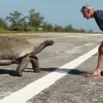 Découvrez ce qui lui arrive quand il interrompt deux tortues en plein ébat