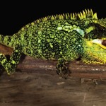 Trois petits dragons découverts dans les Andes