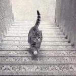 A votre avis, ce chat monte ou descend l'escalier?