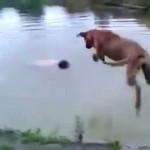Ce chien ne vous laissera pas vous noyer
