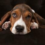 Canicule : 5 conseils pour protéger votre animal de compagnie