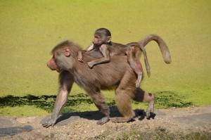 Pourquoi ne faut-il pas nourrir les animaux des parcs naturels zoo?